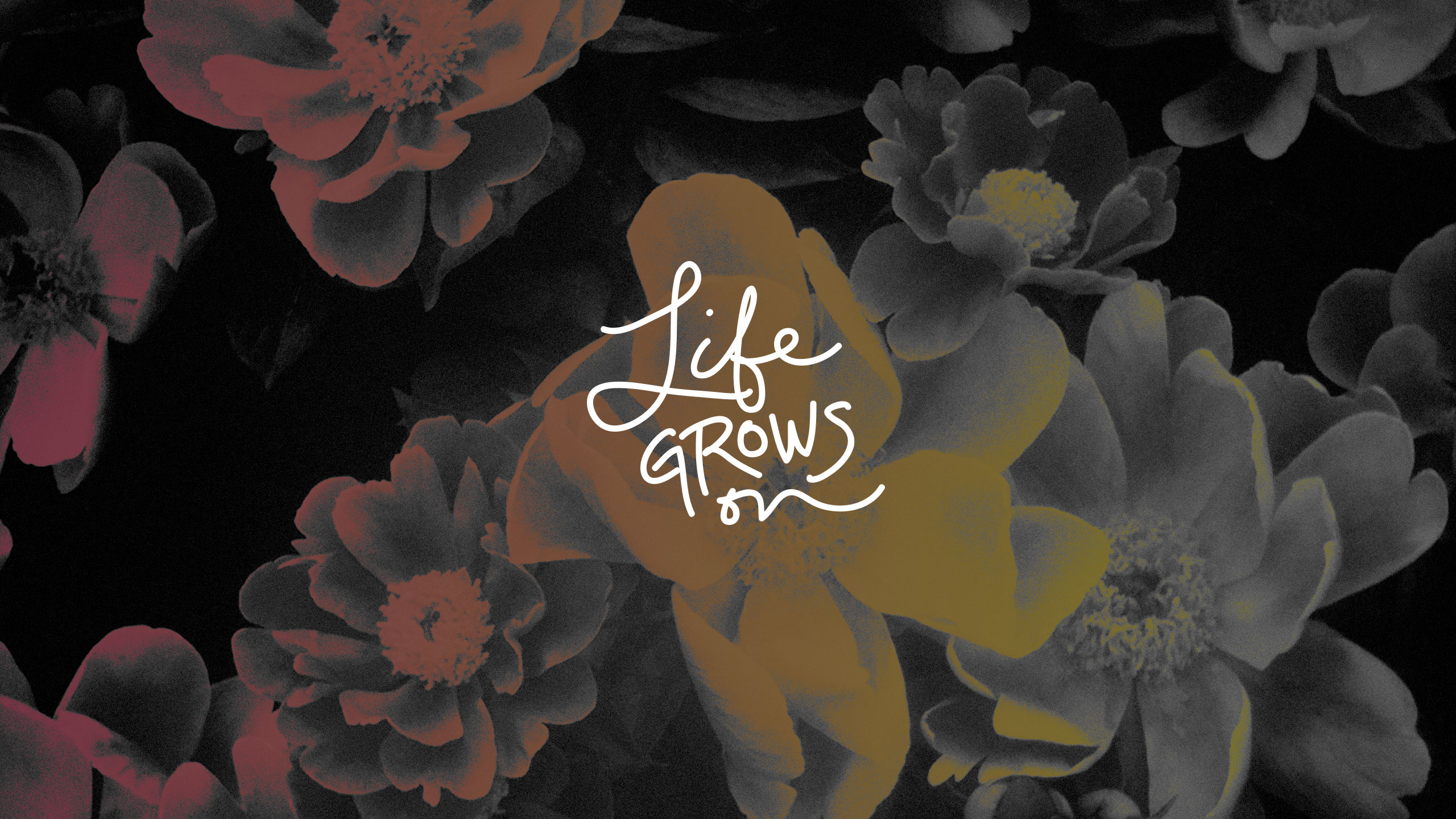 Q Wallpaper: Life Grows On